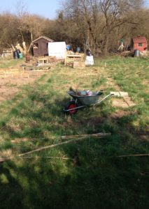 Starting out at the allotment