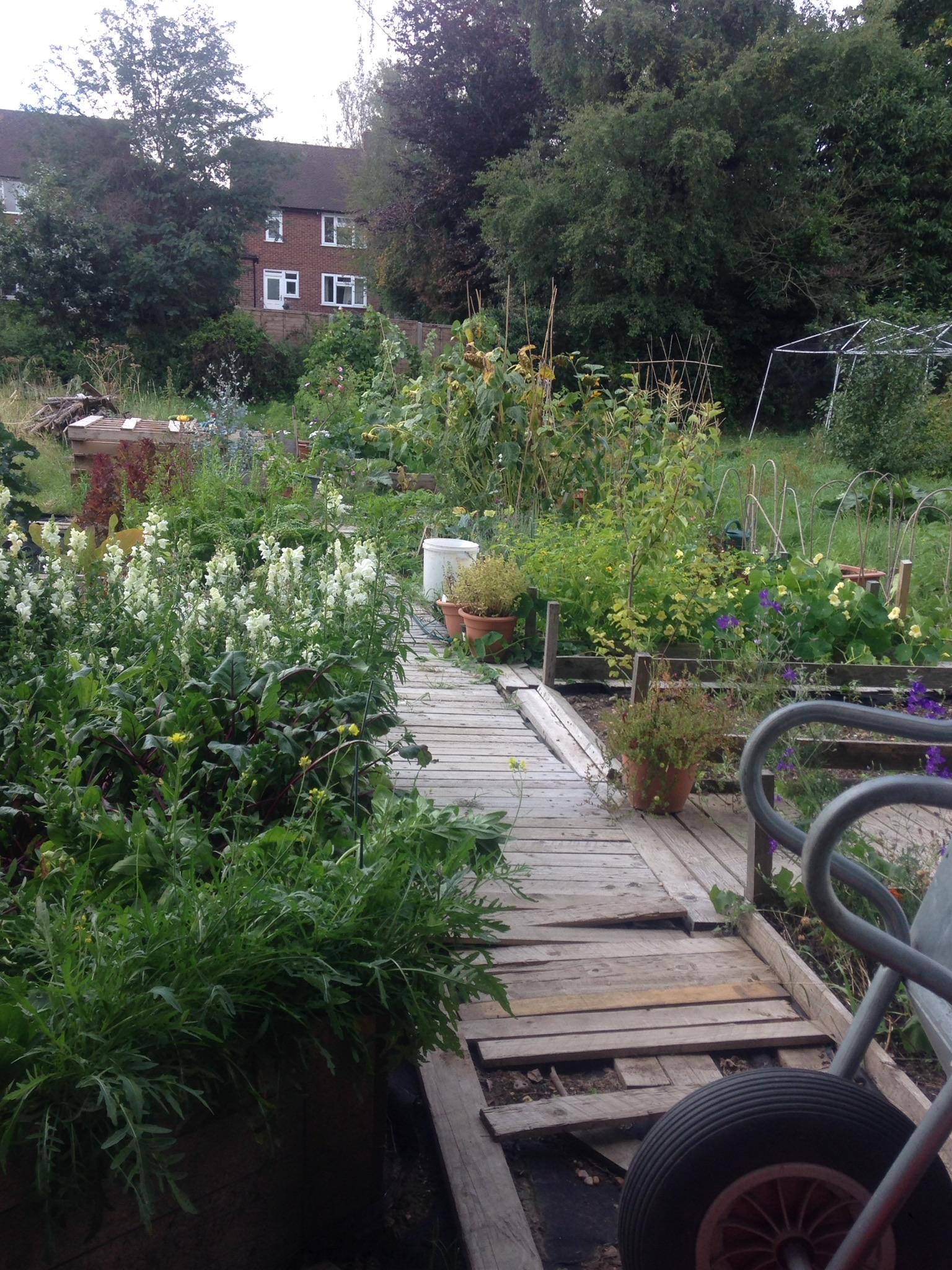 Garden Jobs in August