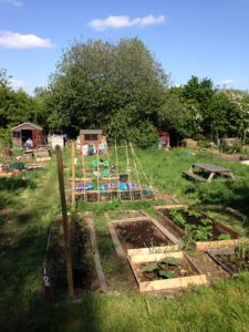 My Allotment, just 3 months in