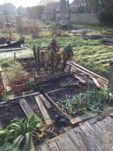 The allotment in January