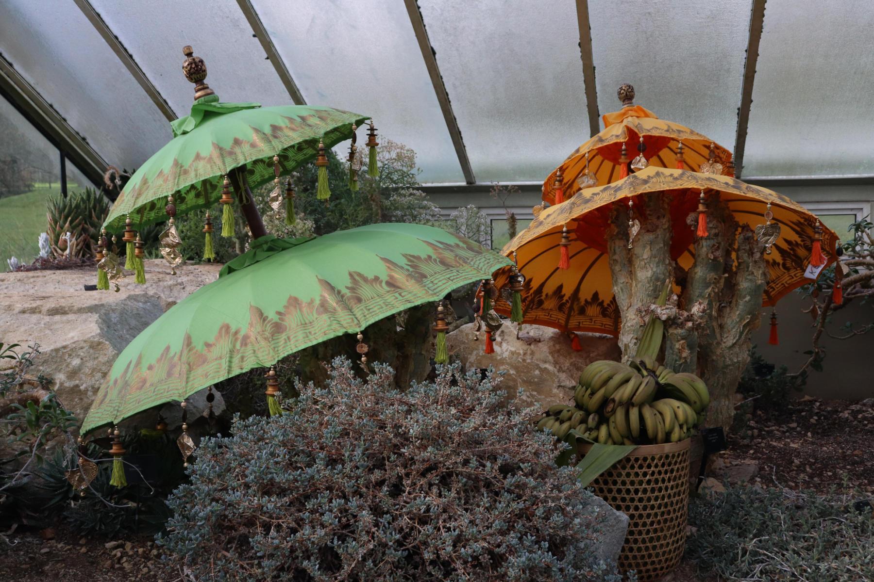 Kew-Orchids-2020-33